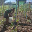 Pos Salore Satgas Pamtas Yonif 742/SWY Bangkitkan Ekonomi Masyarakat Melalui Pertanian