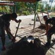 Satgas Pamtas Yonif 742/SWY Kembali Bantu Rehab Rumah Warga Maumutin
