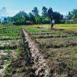 Satgas Pamtas Yonif 742/SWY Turun Kesawah Bangkitkan Gairah Pertanian di Perbatasan RI – RDTL